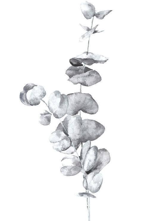 White Eucalyptus In Watercolor