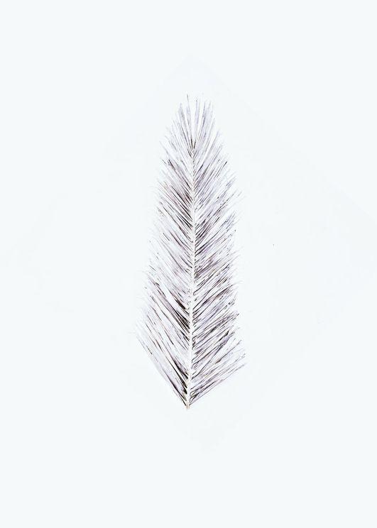 White Palm Leaf